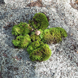 A4-square-25th-May-Moss-flower-crop.jpg